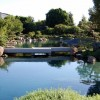 Summer programs at Japanese garden