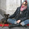 Campaign tackles homeless pet problem