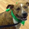 Pet of the Month: Carlos is the perfect 'instant dog' for you