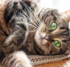 Program 'fixes' pet cats for free