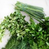Lunch series offers tips on fresh herbs