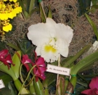 Orchidfest returns to Baker Nursery