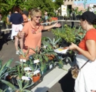 Annual fall plant sale, workshops