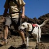 Tips for hiking with your dog