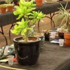 Cacti, succulents featured at show