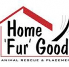 Home Fur Good uses grant for adoptions