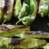 Special menu features popular Hatch chiles