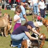 Doggie Street Festival at Indian School park