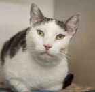 Pet of the Month: Affectionate Baxter is ready to be loved