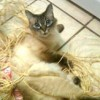 Cat behaviorists help with issues