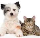 Get your male dog, cat fixed for $20