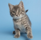 Pet of the Month: This kitten is out of this world