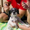 Rescue Rinse event aids senior animals