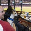 Ballpark boasts new pet-friendly areas