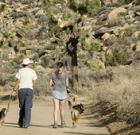 Dogs barred from trails during extreme temps