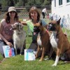 Local dog trainer pet-training services