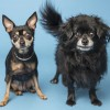 Pet of the Month: Best buddies need a home together