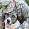 Foster homes sought for pets of deployed military