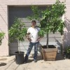 Pop-up nurseries to feature fruit trees