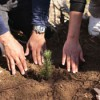 Buy a T-shirt, have a tree planted in U.S.