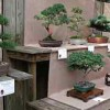 Learn more about the art of Bonsai