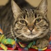 Pet of the Month: Let this Sunshine brighten your home