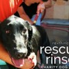 Charity dog wash aids Labrador rescue group