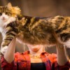 Cat show, adoption events set for June