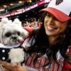 Adopt a dog and take in a game on Aug. 14