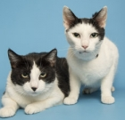 Bonded pair need to stay together
