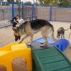 New exercise, play area for shelter dogs