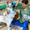 Meeting features two animal rescue groups