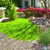 Free landscape watering workshop