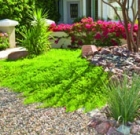 Free landscape watering workshops