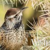 Enter wildlife photos for calendar contest