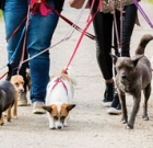 Phoenix ranks in top 50 for pet-friendly services