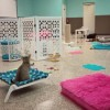 Cat Cafe visits North Phoenix