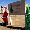 Troop 41 opens annual tree lot
