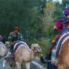 Night of the Three Kings at Phoenix Zoo