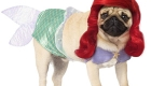 Celebrate Dogtober at two events
