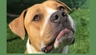 'Unicorn' fosters sought for adult dogs