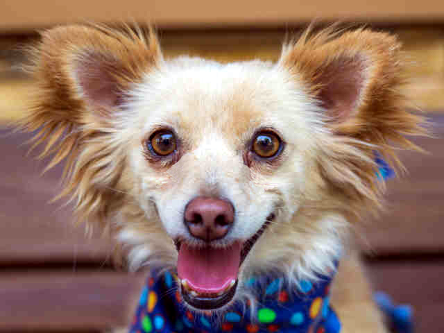 """Willie has a """"surfer dude"""" hairdo and a beach bum personality, preferring a life of leisure. All he wants is someone to hang out with and be his constant companion."""