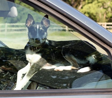 it is against the law to leave an animal in a parked car if injury or death can be a result.