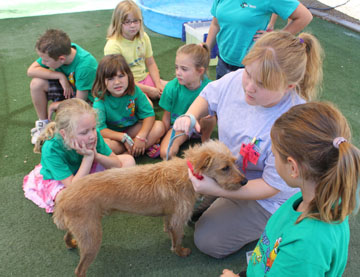 North Central teen Hollie Bowman, a junior camp counselor at the Arizona Animal Welfare League shelter, talks to a group of younger children about how to properly care for their dogs (submitted photo).