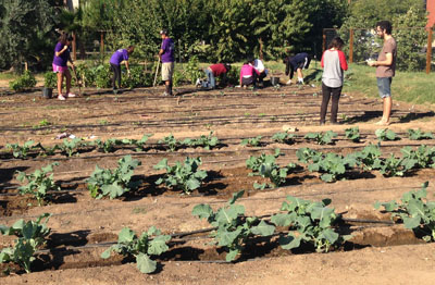 The Growing Together … A Giving Garden at 2nd Street and Glendale Avenue boasts a list of more than 250 volunteers, many of who show up each Saturday to tend the garden. Garden board members are in search of a new home, but are confident the volunteers will follow, wherever the garden winds up (submitted photo).