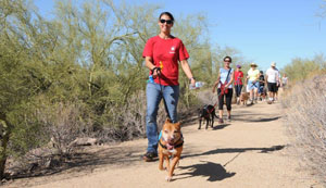 Volunteer dog walkers hit the trail with shelter dogs from Maricopa County Animal Care and Control (MCACC) as part of its Wag N' Walk Adoption Hike program (submitted photo).