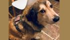 Local dog nominated for national hero award