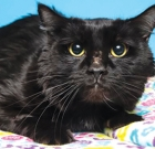 Pickle is handsome kitty who needs love, patience