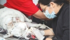 Shortage of vets poses concern for pet owners