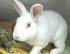 Sweet rescue bunny is still a little shy